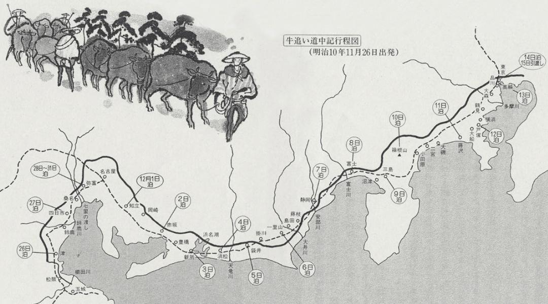 特産松阪牛へのこだわり 現代の牛追道中へ